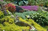 rock garden plants a list to guide your plant selection