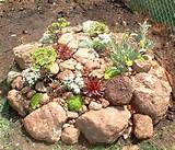 rock gardens a wonderful backyard feature articles web
