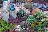 Cactus Succulent Garden Nadia Knows Gardens