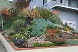 Ducote-Barnes Front Garden Slope by David Feix Landscape Design , on ...