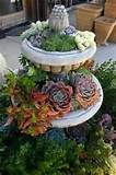 Garden Pictures Ideas on 35 Indoor And Outdoor Succulent Garden Ideas ...