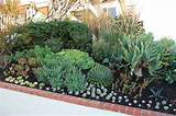 New Succulent plantings at Front Garden | Flickr - Photo Sharing!