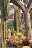 san diego succulent garden