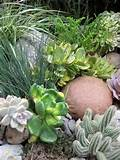 Some photos of my succulent rock garden. - Cacti & Succulents Forum ...