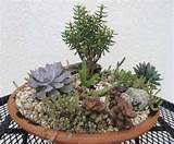 Succulent Dish Garden - by Gone_Tropical | GardenTenders.com ...