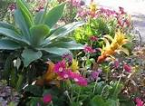 Succulent Garden Design Ideas - Succulent Gardens for Pools and Patios ...