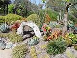 Succulent Landscaping Ideas