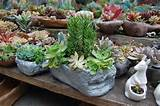 Succulent Pots | Far Out Flora
