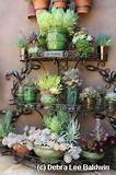 Succulent garden design, ideas for landscaping with succulents