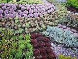 The Succulent Garden nursery :: Landscaping ideas