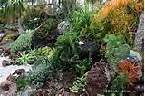 an undersea-themed succulent garden, with plants tucked amid lava rock ...