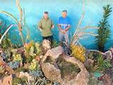 ... garden Jeff created using lava rock and a variety of succulent plants