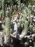 succulent garden | A Caribbean Garden