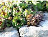 succulents_rock_garden