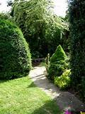 Bringing Privacy to Your Backyard with Hedges or Shrubs ...