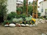 landscaping plants pictures