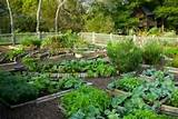 Backyard Vegetable Garden Design Ideas 450x301 Backyard Vegetable ...