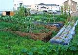 Backyard Vegetable Garden Ideas | Beauty Garden Wallpapers