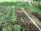 Garden Design for Organic Vegetable Gardens