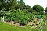 how to grow a vegetable garden diy life