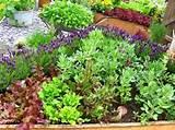 recycled love letters vegetable gardening let the plot begin