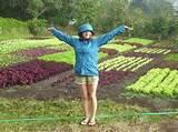 vegetable production for the backyard gardener home design ideas