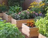 backyard vegetable garden 002