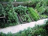 backyard vegetable garden design plans