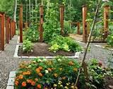 garden ideas vegetables