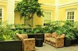 ... Indoor Plants Indoor Plants Ideas, Great Solution for Indoor Gardening