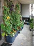 potted plants with vines on the wall