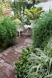 softening patio borders with plants