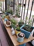 small plants apartment patio garden ideas