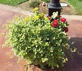 Container Gardening on the Patio - Patios & Deck Designs - Decorating ...