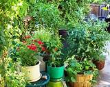 Five tips for gardening in containers