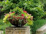 container-garden-calibrachoa-petunia-sweet-potato-flowers ...