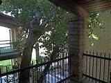 Mid-Century Modern Valle Vista Condos Designs - Garden