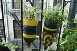 DIY Herb Garden Ideas   LesserEvil Life