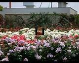 Garden Ideas Include Butterfly Garden Water Garden Herb Garden,