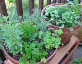 Herb gardens are not complicated and can be a garden plot or pots on ...