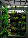 Living Wall Plant Patio Ideas - Best Patio Design Ideas Gallery