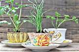 ... accent for a patio or windowsill. They make great party favors too