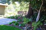 shade garden under redwood trees julie orr design