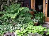 Garden Design 2011: Shade Garden Designs
