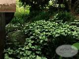 shade garden design a part shade garden lamium liriope and creeping