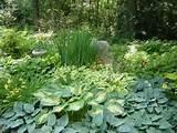 100% Natural Hardwood Mulch: Shade Gardens