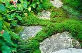 16 garden rockery garden design ideas