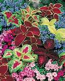 annual flowerbed combination ideas shade