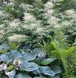 using large plants as focal point in your garden design