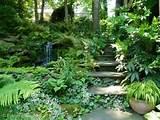 shade garden ideas 7-22-12